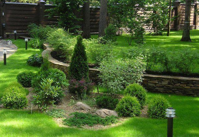 Деревья и кустарники на клумбе