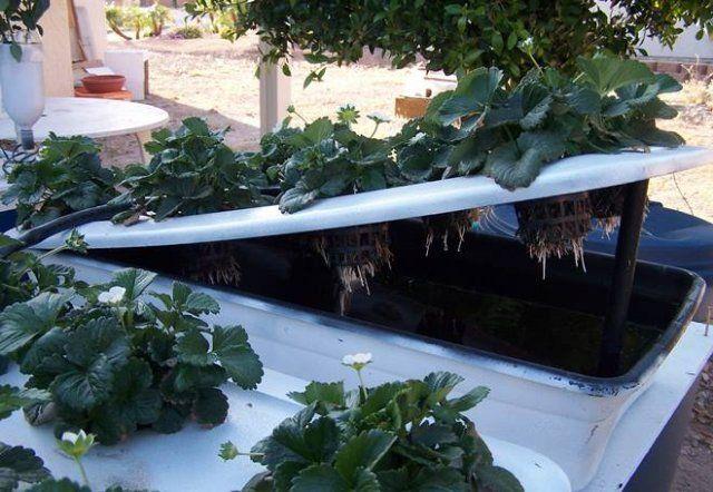 Выращивание в домашних условиях на гидропонике 911