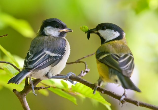 Птицы против вредителей