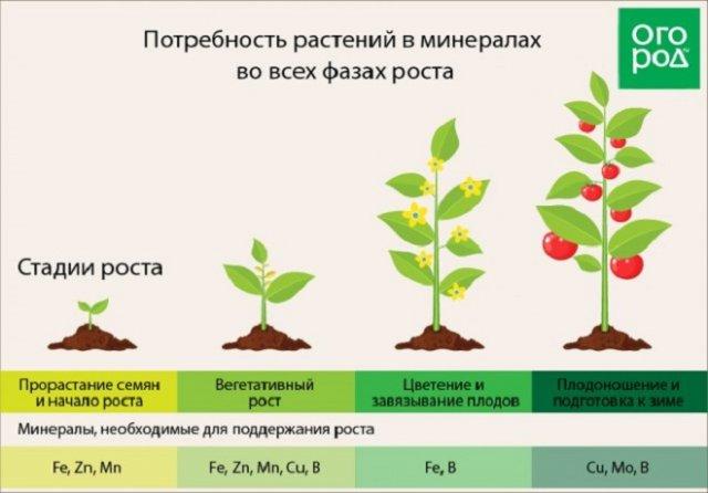 Витамины для растений – универсальная подкормка на все случаи жизни