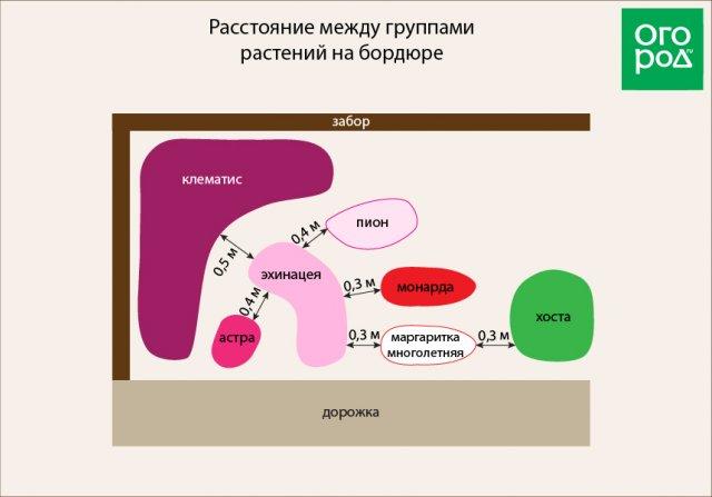 Расстояние между группами растений на бордюре