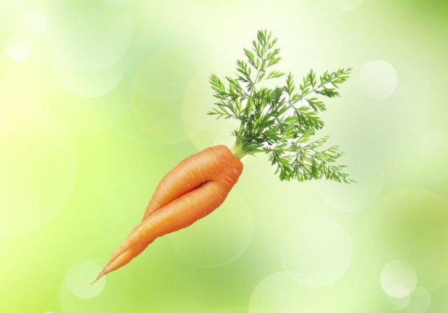 морковь корявая