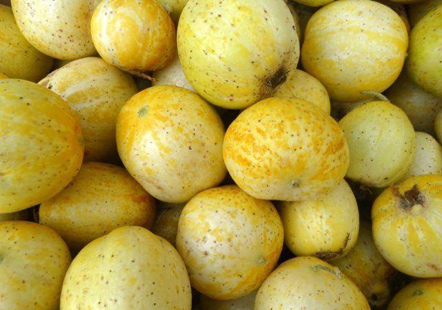 огурец-лимон много плодов фото