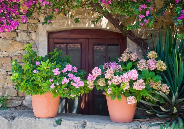 Italian house exterior decorated with hydrangea in flowerpots and Bougainvillea tree. The location is an small town in the middle of the Cilento and Vallo di Diano National Park (Campania, Italy).