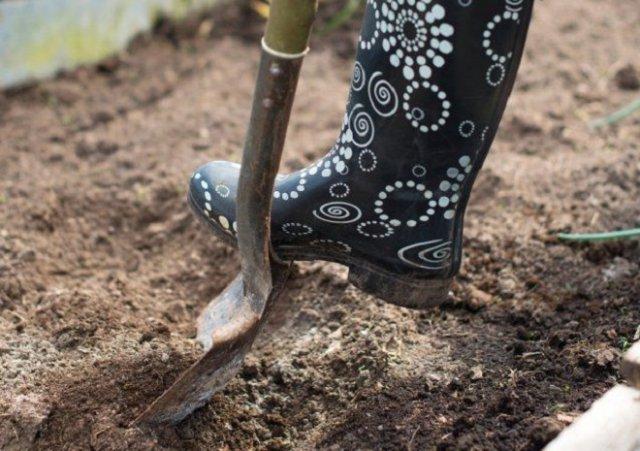 Как делать плодородную землю из песка