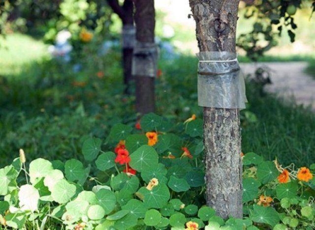 защита от насекомых деревья