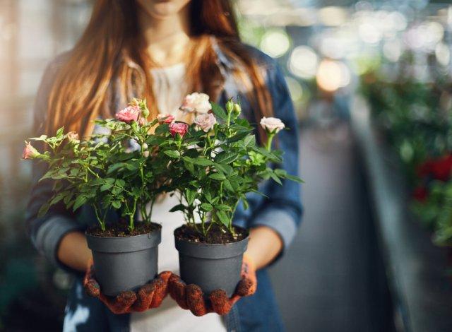 Выбор розы