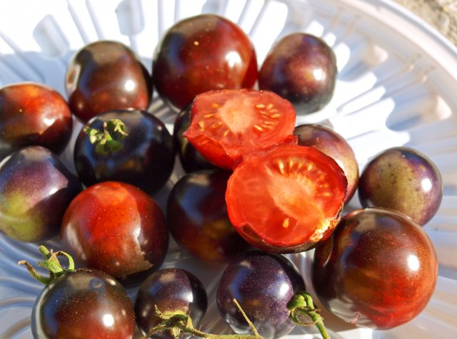 синие томаты в разрезе