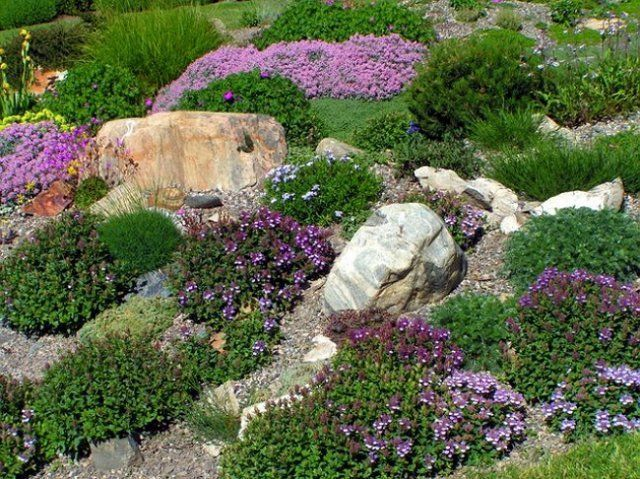 Альпийская горка с фиолетовыми цветками