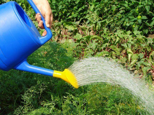полив растений, лейка, подкормка растений