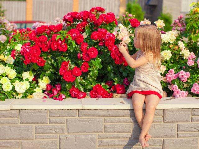 Девочка любуется розами