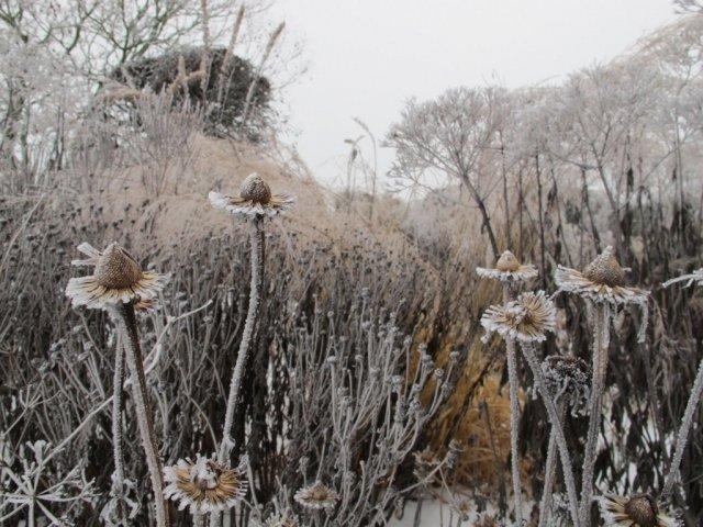 Зима в саду новой волны