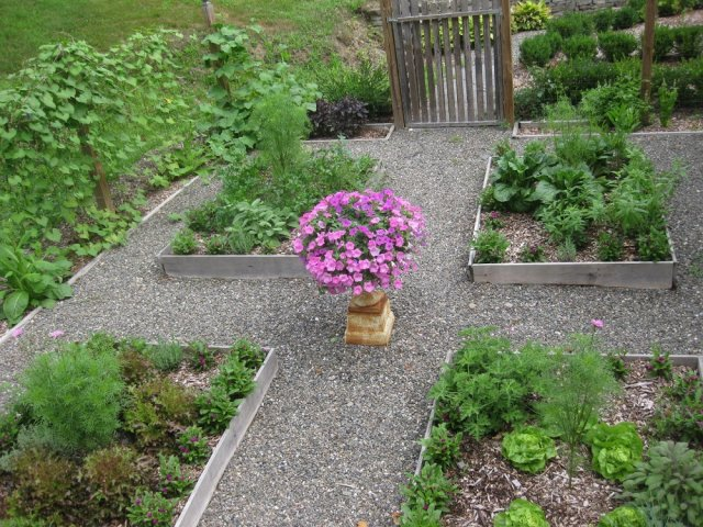 Широкие междурядья в огороде