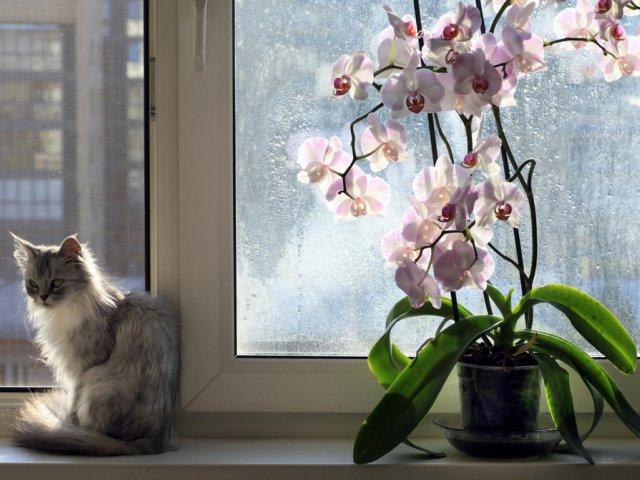 Орхидея зимой