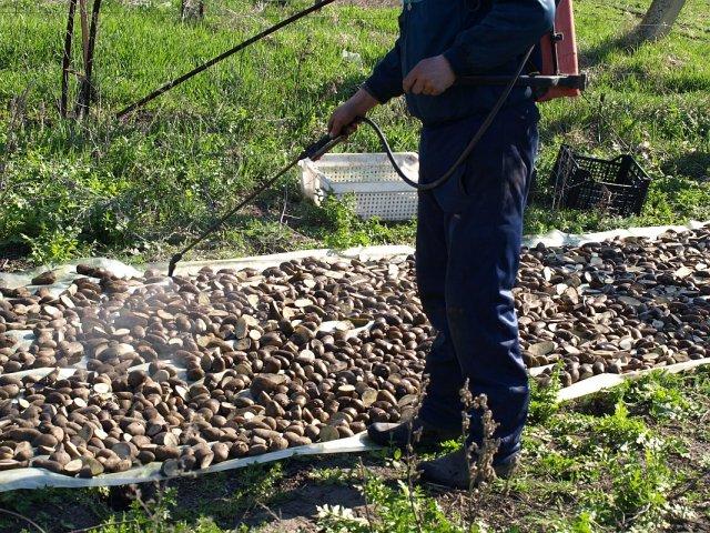 Защита картофеля