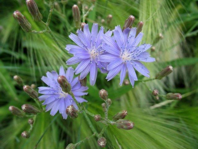 как красиво и правильно снимать цветы в саду