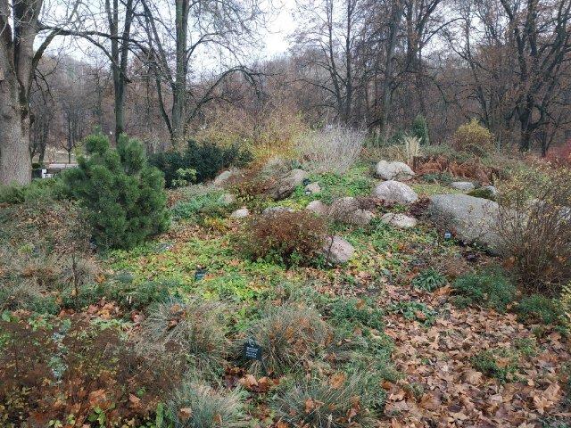 сады бернардинцев
