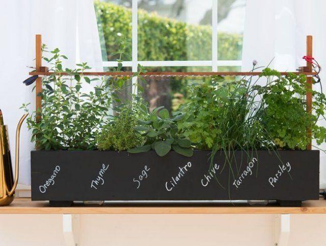 растения в оконном ящике