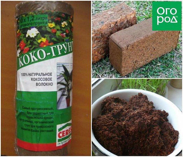 Кокосовый субстрат для семян и рассады как подготовить и использовать