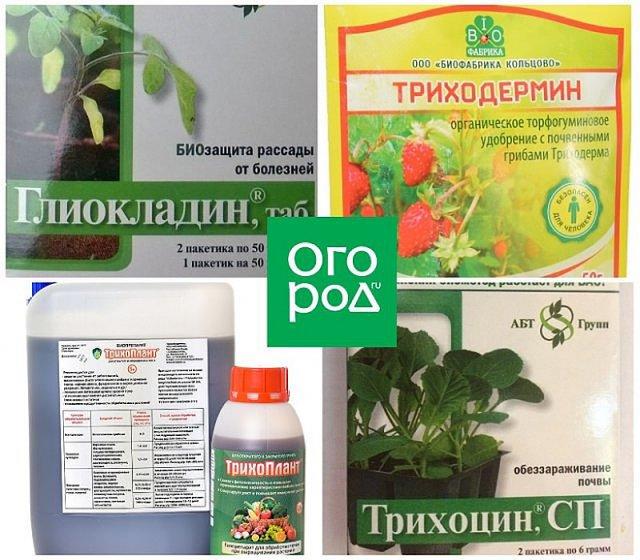 лучшие средства для растений томатов