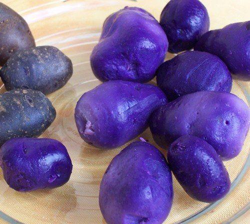Синий картофель
