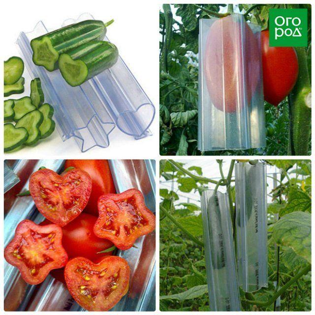 формочки для овощей и фруктов