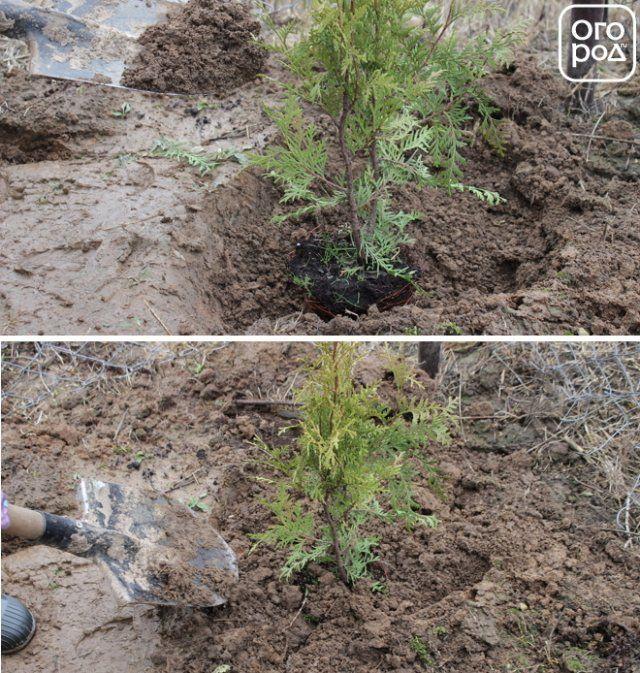 Картинка человек сажает дерево 91