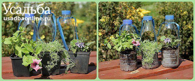 цветы растут в пластиковых бутылках
