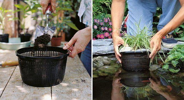 Посадка водных растений в контейнеры позволяет менять дизайн пруда