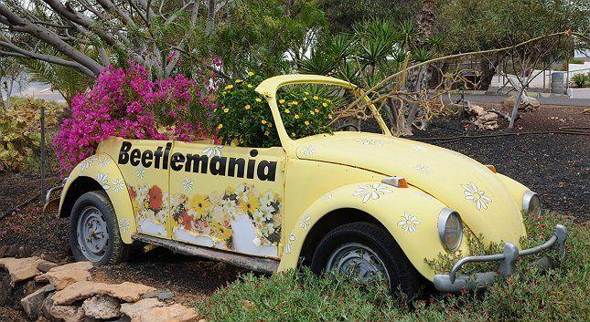 цветы растут на клумбе в старом автомобиле фото