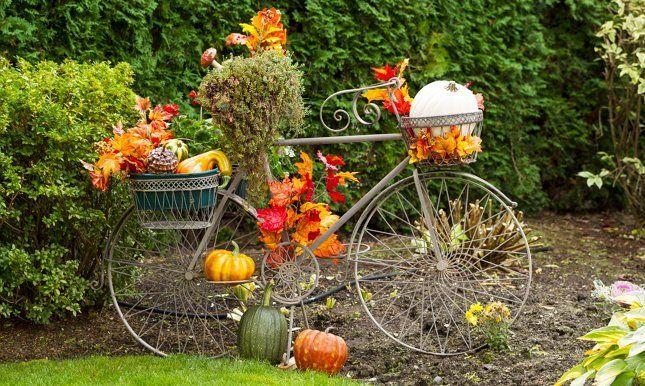 цветы растут на старом велосипеде клумба фото
