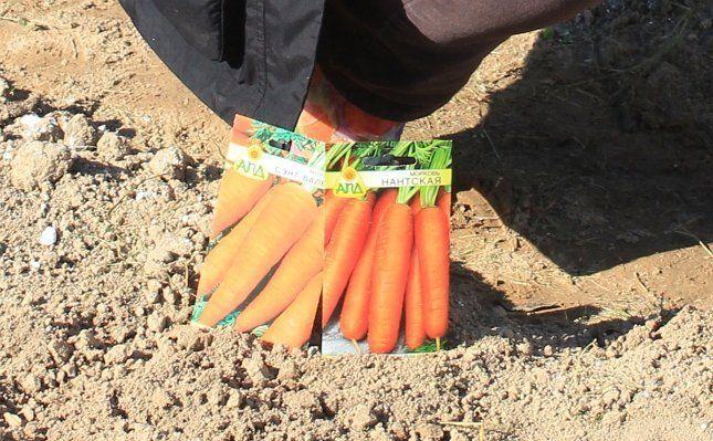 Семена моркови в пакетиках