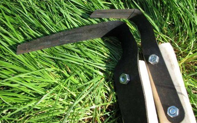 плоскорез Фокина на траве