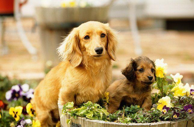 Собаки на фоне цветов фото
