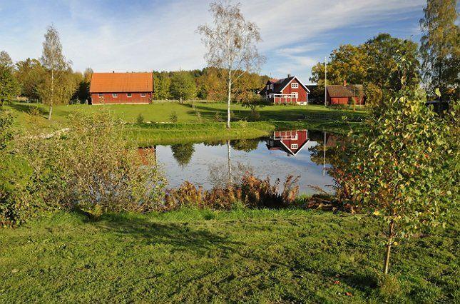 Пейзажный пруд можно просто вписать в имеющееся пространство, отказавшись от экзотики и посадив вокруг лишь местные растения