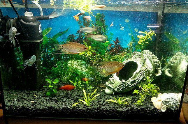 аквариум внутренний фильтр фото