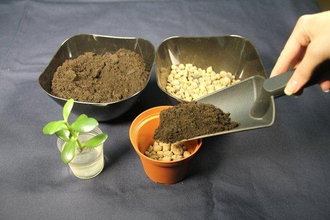 Заполнение горшочка почвой