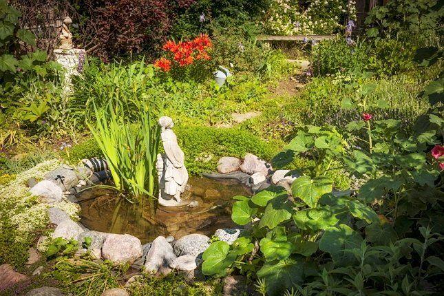 Для маленького пруда нужно подбирать небольшие растения