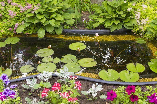 Растения вокруг пруда не должны перекрывать собой сам водоем