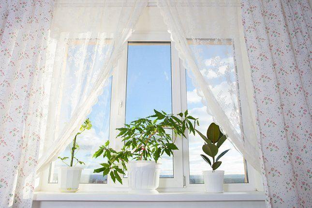 Растени на окне