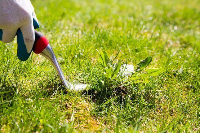 Борьба с сорняками в саду при помощи инструмента