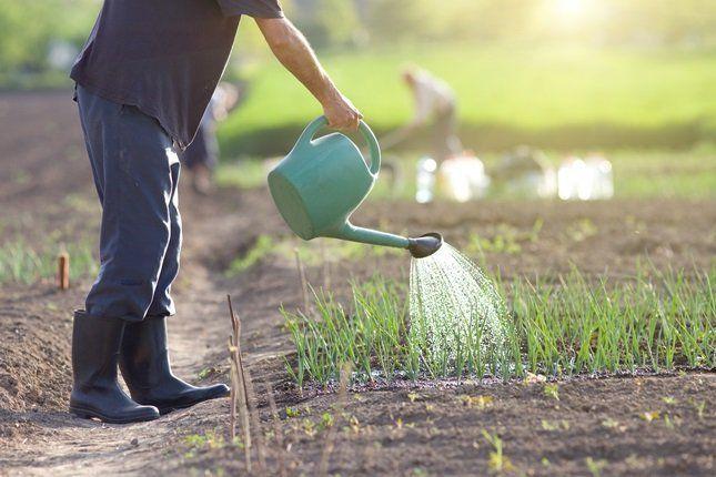 Бесперспективно вносить ЭМ-препараты в почву, а растения обрабатывать в летний период ядохимикатами