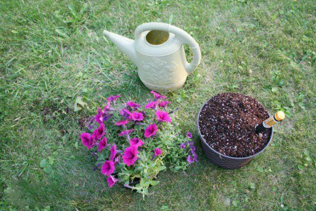 Петунии - лучшие растения для подвесных кашпо