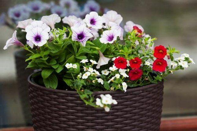 В один контейнер можно высадить сразу несколько растений