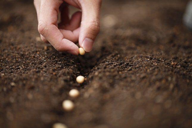 Нельзя проводить посев в низинах, поскольку весной они затапливаются талой водой