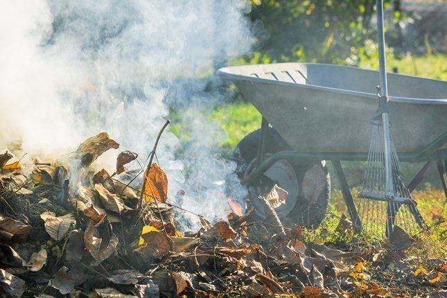Надо ли убирать опавшие листья