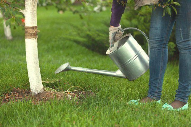 Как поливать и подкармливать деревья осенью