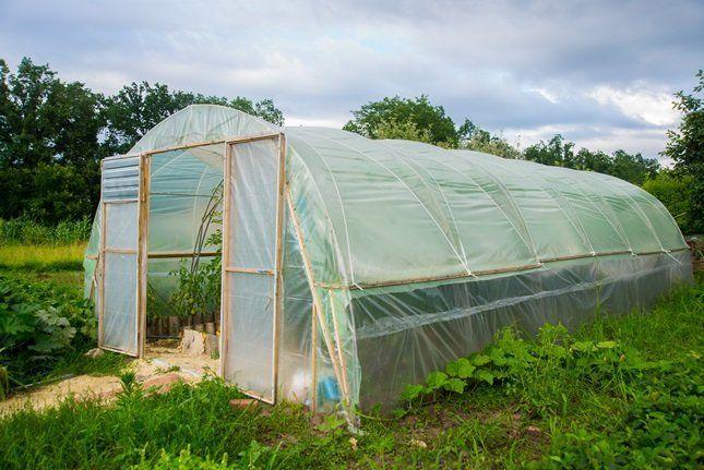 После сбора урожая теплица нуждается в новой земле