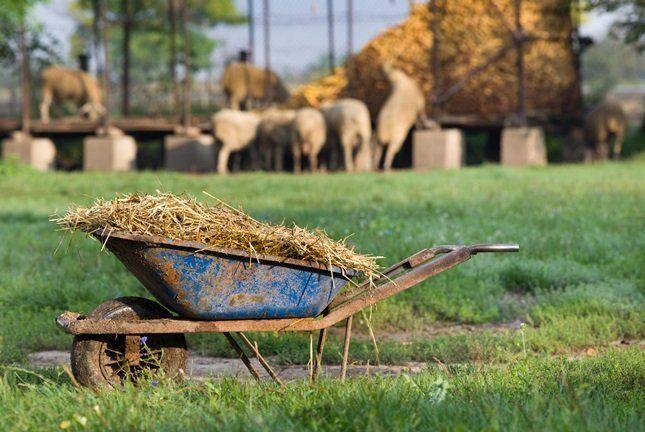 Комбинированные рабочие растворы можно совмещать с навозом, компостом, куриным пометом