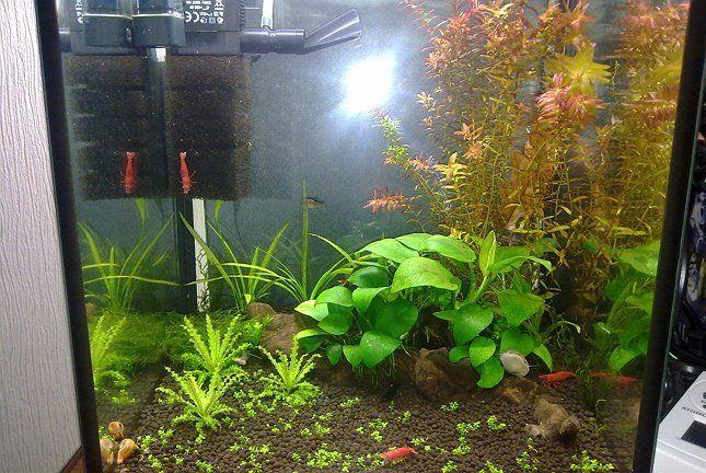 Внутренний фильтр аквариум растения в аквариуме фото